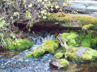 My Gold Panning River Waterfalls