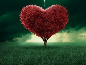 The Field of Big Love