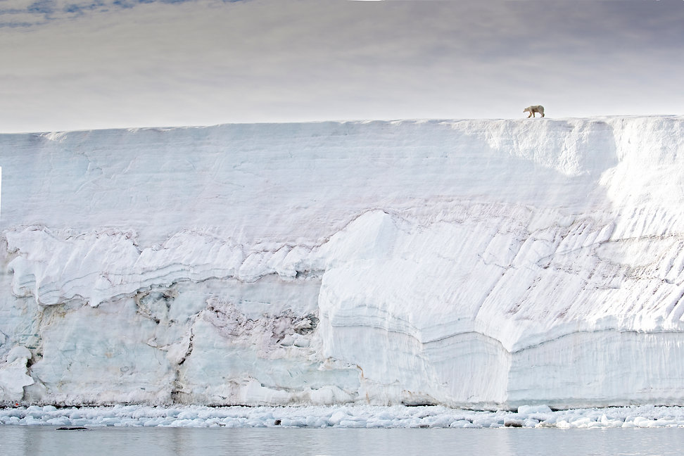 Polar bear on an arctic glacier