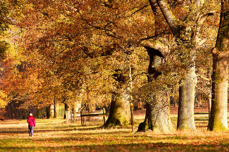 levens trees fall man.jpg
