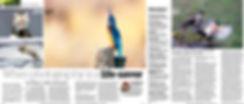 AP article complete.jpg