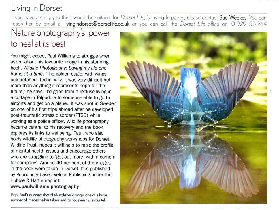 Wildlife Review dorset life.jpg