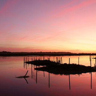 sony tern island sunrise.jpg