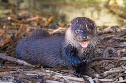 Otter Kit