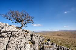Lone Tree V