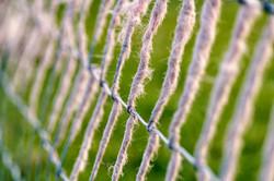 Wool Fence