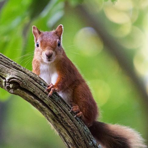 red squirrel dwt workshop.jpg