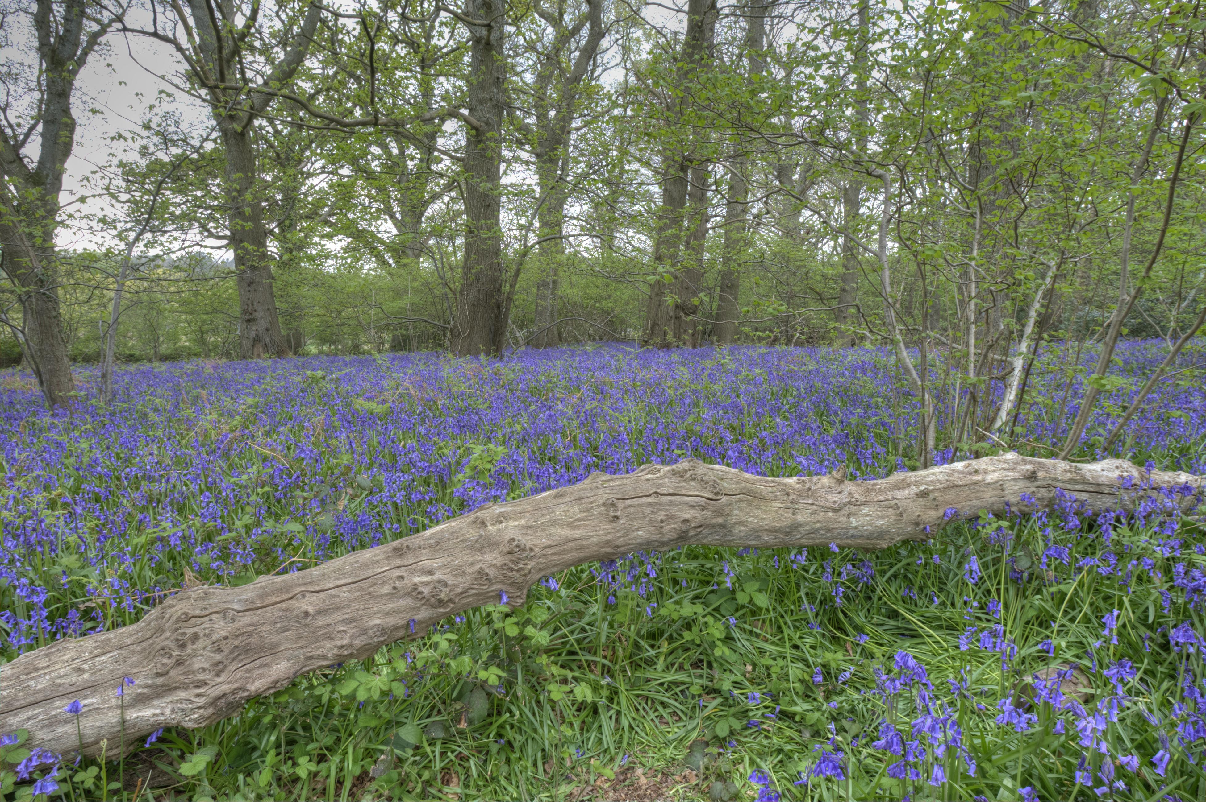 Spring, Pamphill
