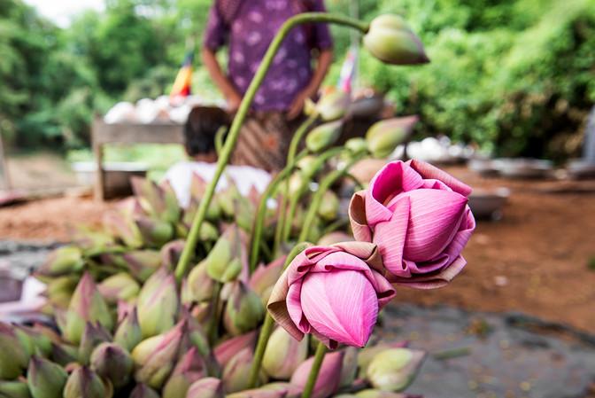 INDIA-0657.jpg