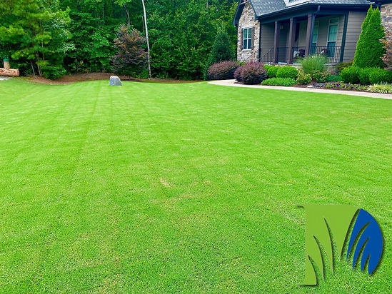 Grass, Lawn Care, Lawn Care Service, Landscaping, Turf, Turf Management, Raleigh