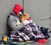 homeless_dog.jpg