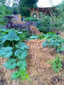 gardens 1.jpg