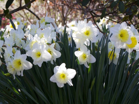 Spring has sprung early!