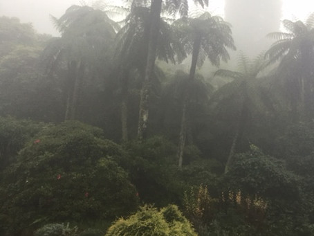 Marvellous Mist!