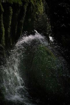 苔に落ちる水