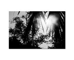 In Nature 012