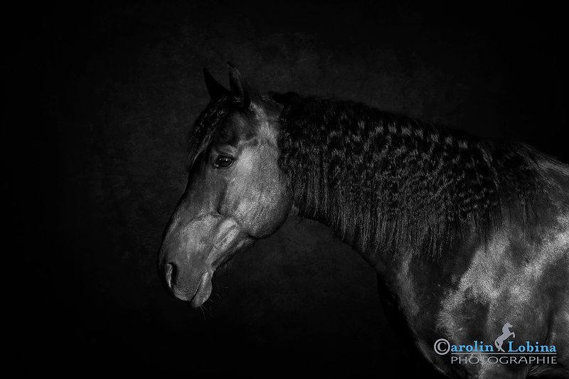 Pferd im Studio, Carolin Lobina
