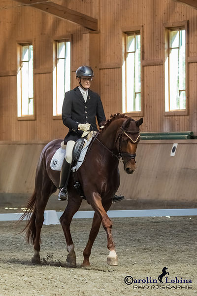 Pferd, Reiter im Trab, Turnier, Carolin Lobina