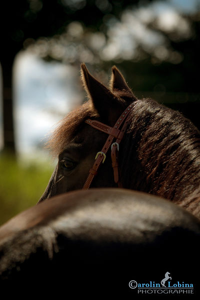 Pferd Carolin Lobina