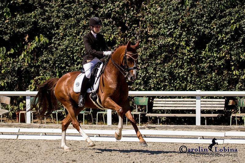 Pferd, Reiter im Mittelgalopp, Turnier, Carolin Lobina