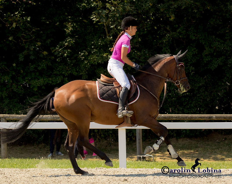Pferd, Reiter im Galopp, Carolin Lobina