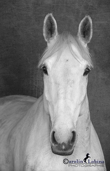 Pferdeportrait Carolin Lobina