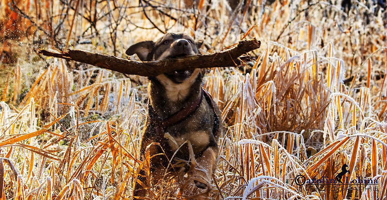 Hund springt durch Raureif, Carolin Lobina