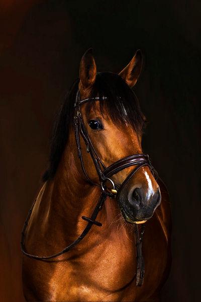 Pony im Studio, Carolin Lobina