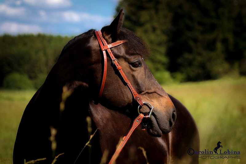 Pferd auf Koppel Carolin Lobina