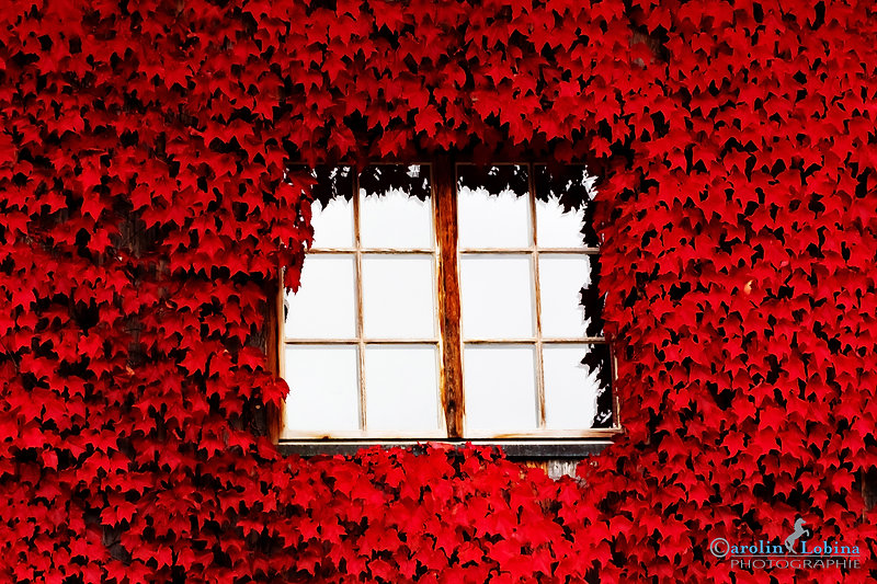 Fenster, Wein, Herbst, Carolin Lobina