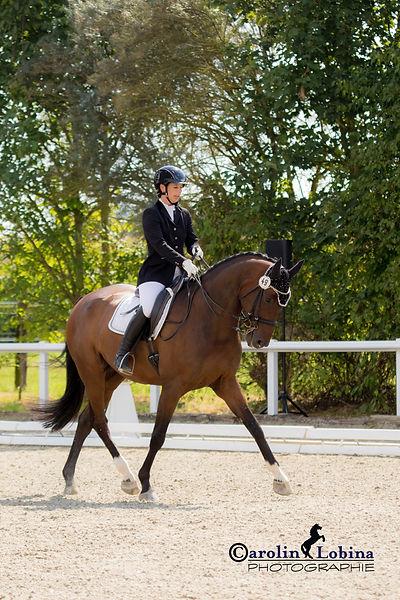 Pferd, Reiter in Trab, Carolin Lobina