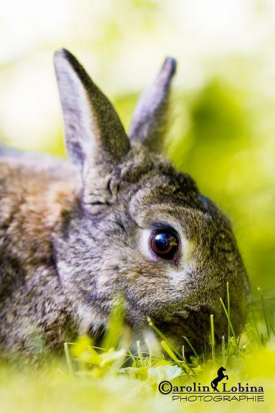 Kaninchen in der Wiese, Carolin Lobina