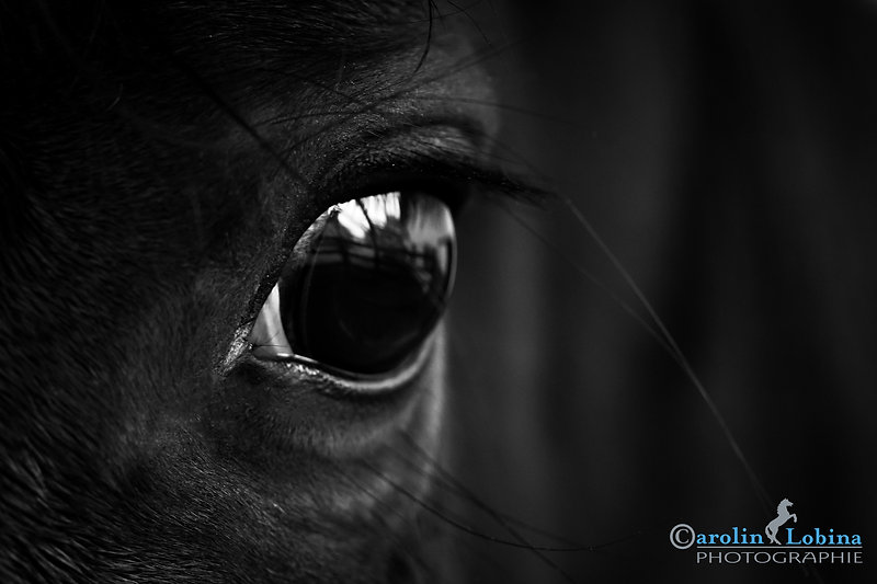 Pferdeauge, Carolin Lobina
