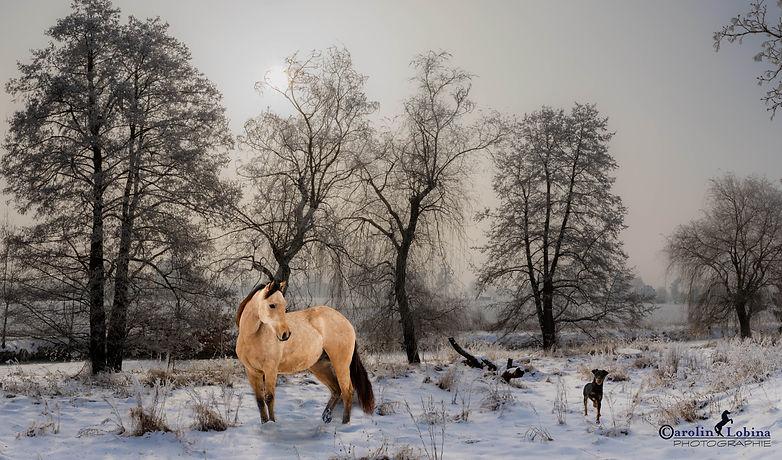 Pferd und Hund im Schnee Carolin Lobina