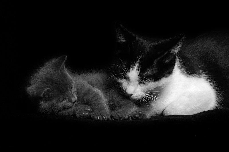 Katze mit Baby, Kitten, Carolin Lobina