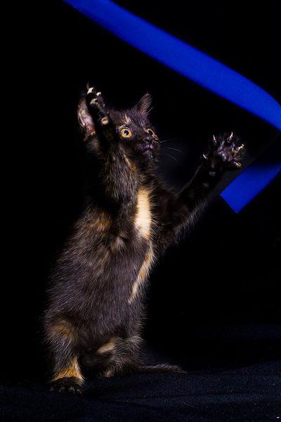 Katzenbaby, Kitten, beim Spielen, Carolin Lobina