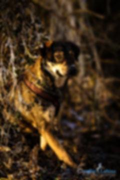 Hund, Carolin Lobina