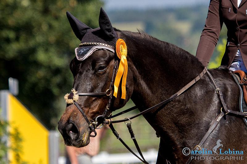 Pferdeportrait, Siegerehrung, Turnier, Gewinner, Pferd, Carolin Lobina