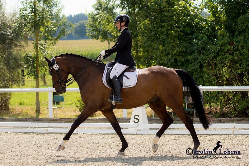 Pferd, Reiter im Trab, Carolin Lobina