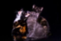 Katzenbabys, Kitten, Carolin Lobina
