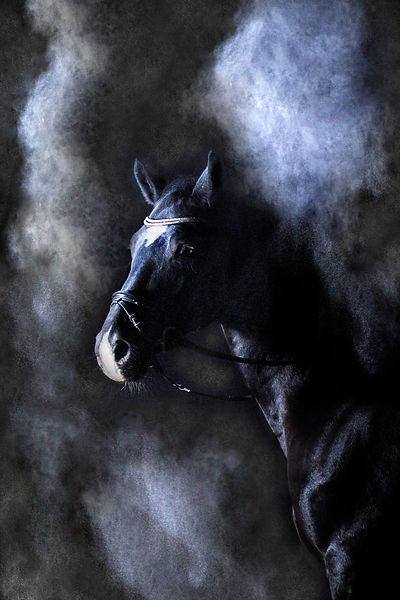 Pferd im Studio mit Mehl, Carolin Lobina