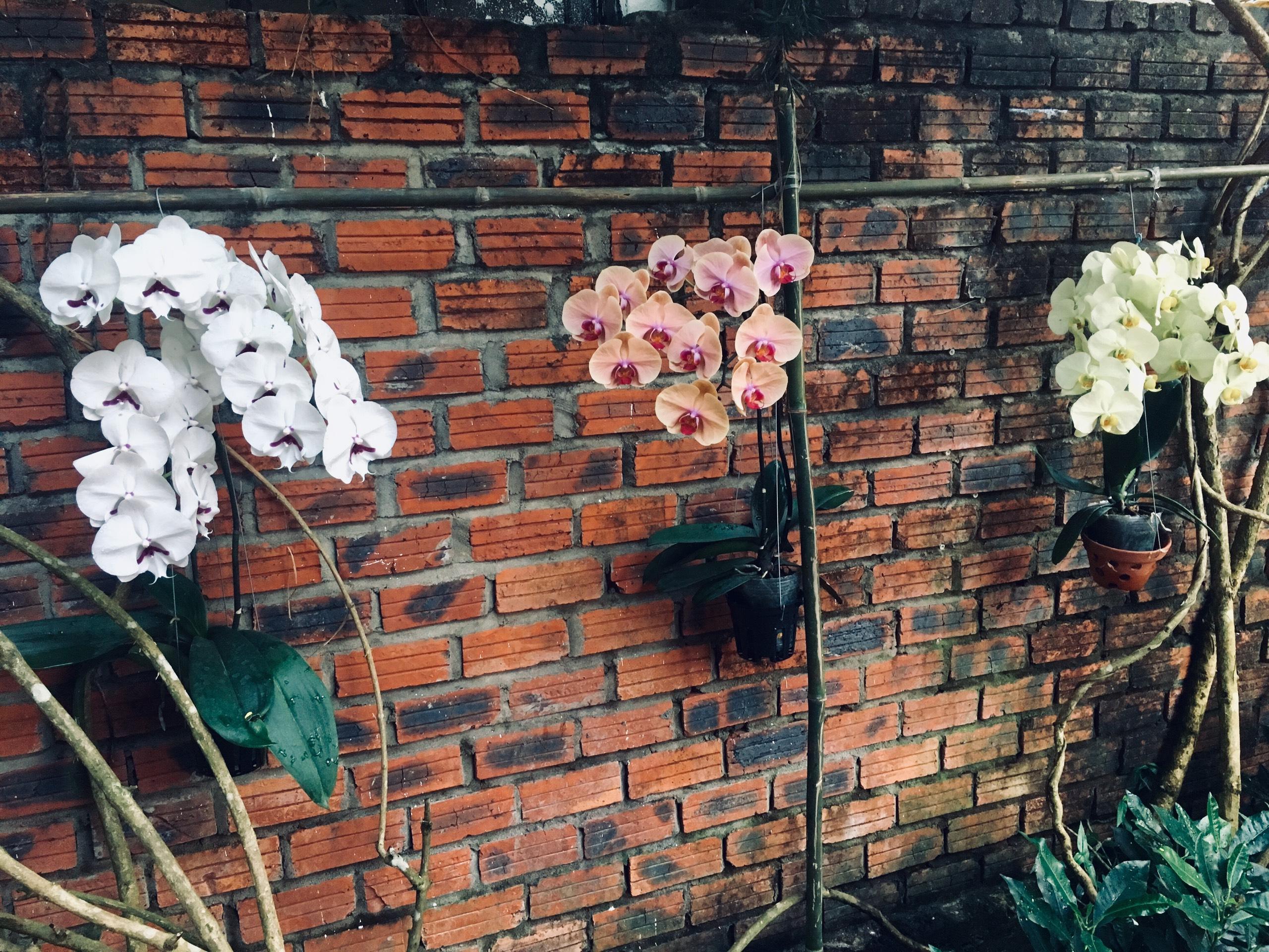 Orchids at Villa Orchid Garden Riverside, A Vacation Rental Resort in Hoi An