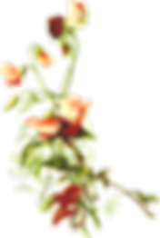 floral-2023179_640.png