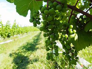L'Acadie_Vineyards_Wine_Tour.jpg
