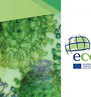 ECDC%20and%20Covid19%20copy_edited.jpg
