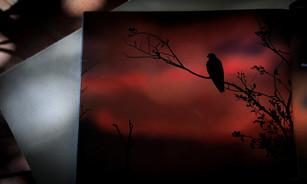 Aves del Manglar