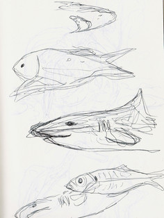 Sea Life Sketches 2