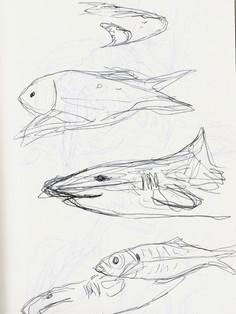 Sea Life Sketches 2