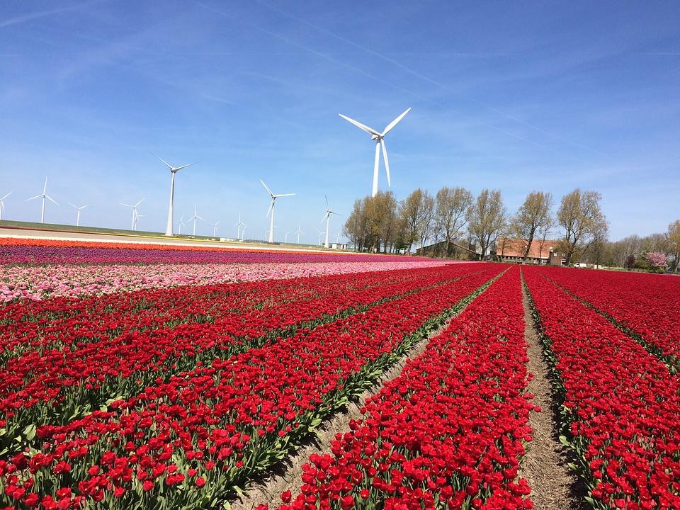 Amsterdã, uma viagem entre tulipas, queijos e moinhos de vento!