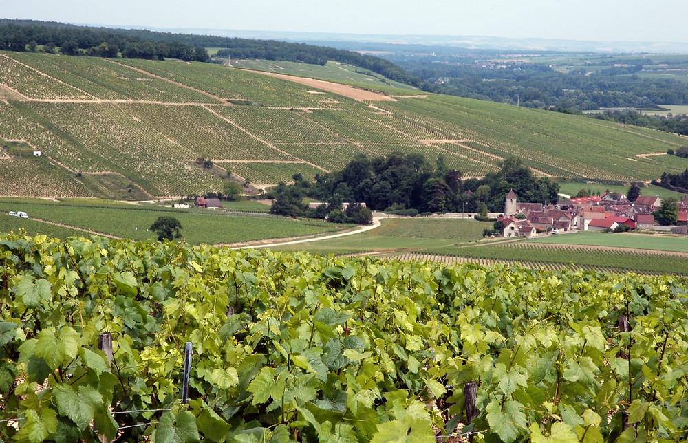 Chablis, Borgonha, França
